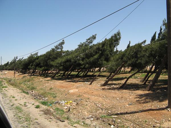 2008bJordanSyriaLeb-24